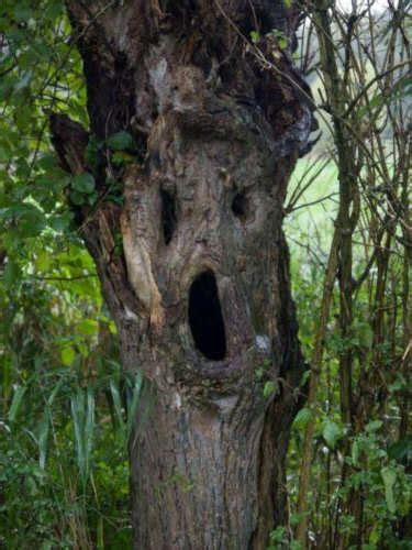 Creepy Trees   Scary Pictures   Scary Website
